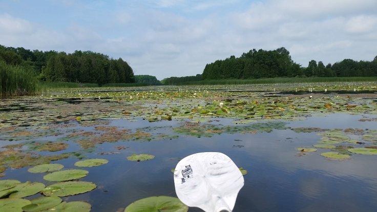 Island Lake Marsh