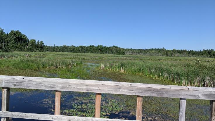 Marsh along trail