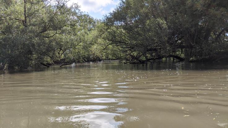 Kayaking in a creek